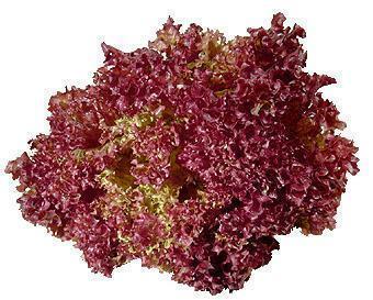 11763_rodzaje-salat---jaka-salate-wybrac_5_2