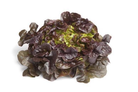 11763_rodzaje-salat---jaka-salate-wybrac_6_2