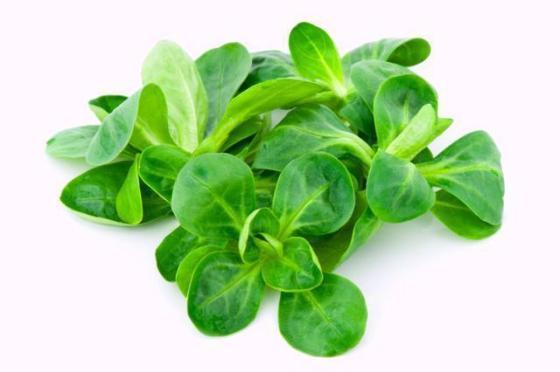 11763_rodzaje-salat---jaka-salate-wybrac_8_2