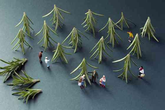 rosemary-xmas-tree-shopping-1024px_slide-f706908fb179f53398cd64de9f07c589ff2df879-s6-c30
